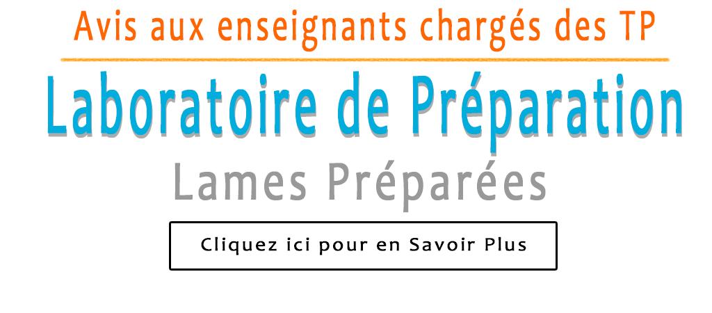 Lames_preparees2